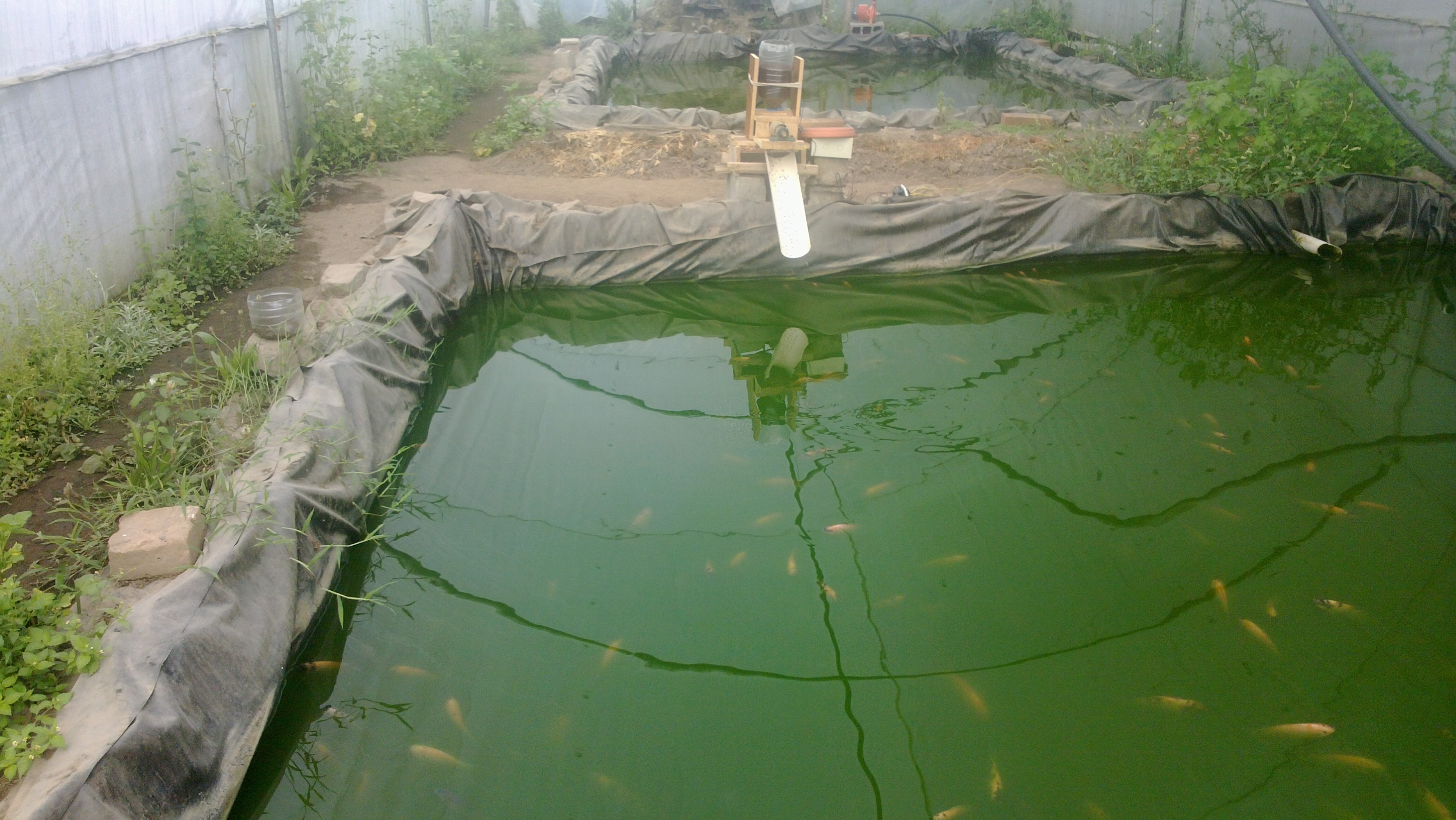 Watching soluciones tecnol gicas ecuador quito for Comida peces estanque barata